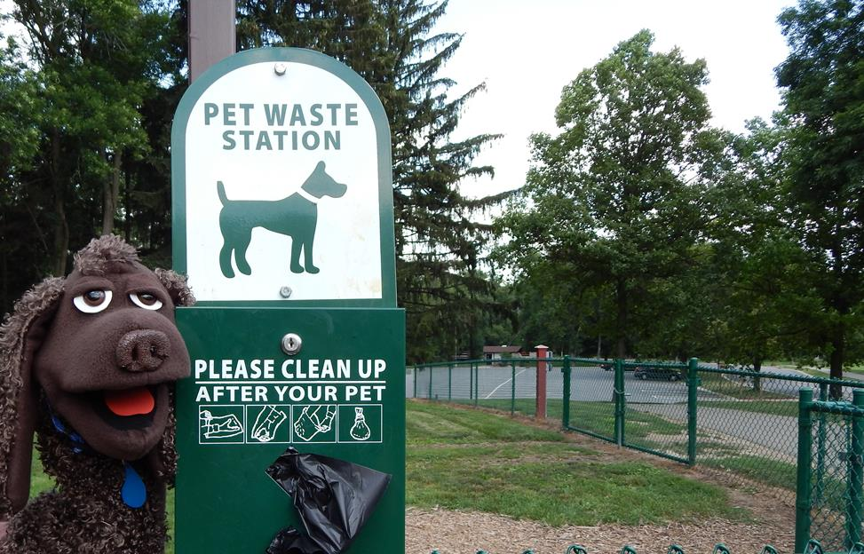 Dog poop that is not properly disposed of can pollute our waterways with bacteria, nutrients and lower dissolved oxygen levels.