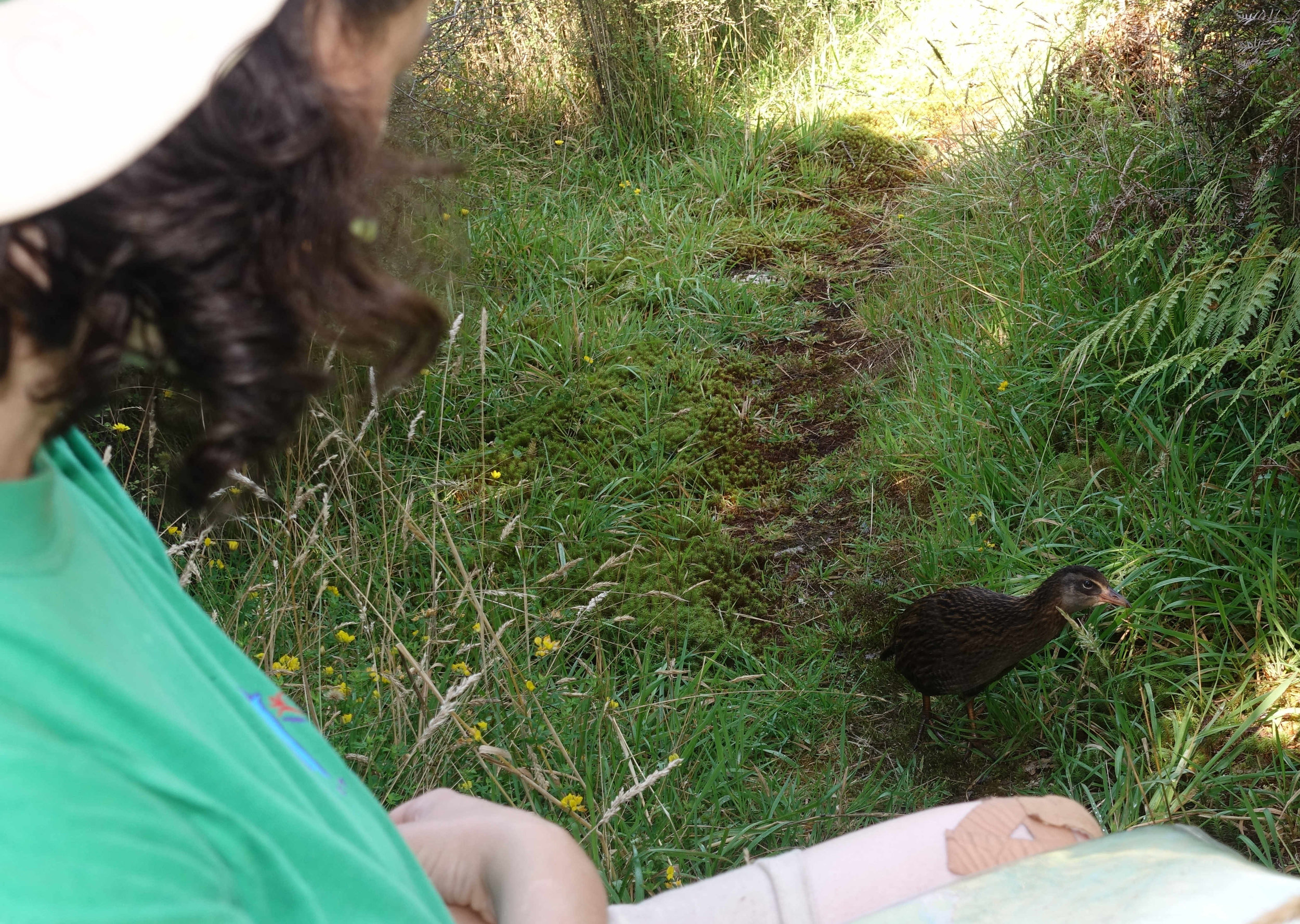Weka visitor during a rest break