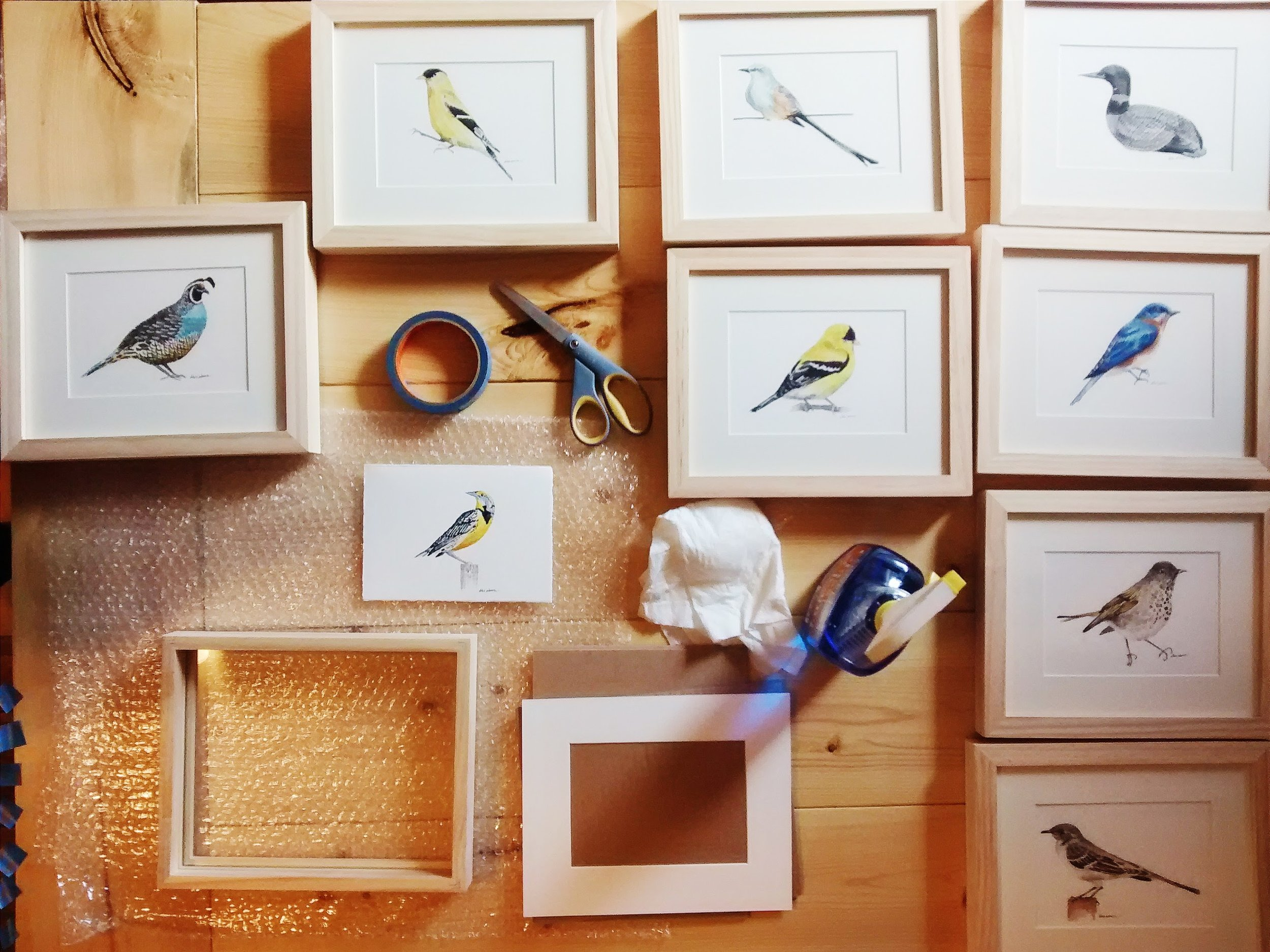 Framing 50 Birds, 50 States original paintings, (gouache and pen on paper).jpg