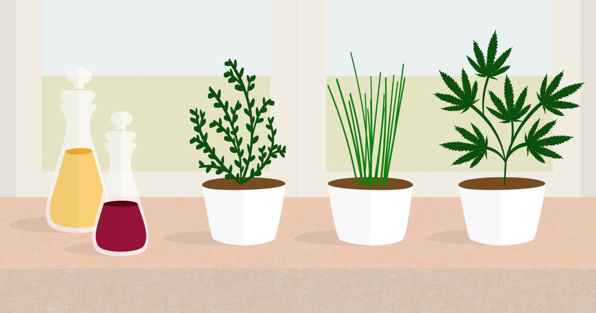 kim-gee-studio-graphic-design-editorial-illustration-cooking-weed