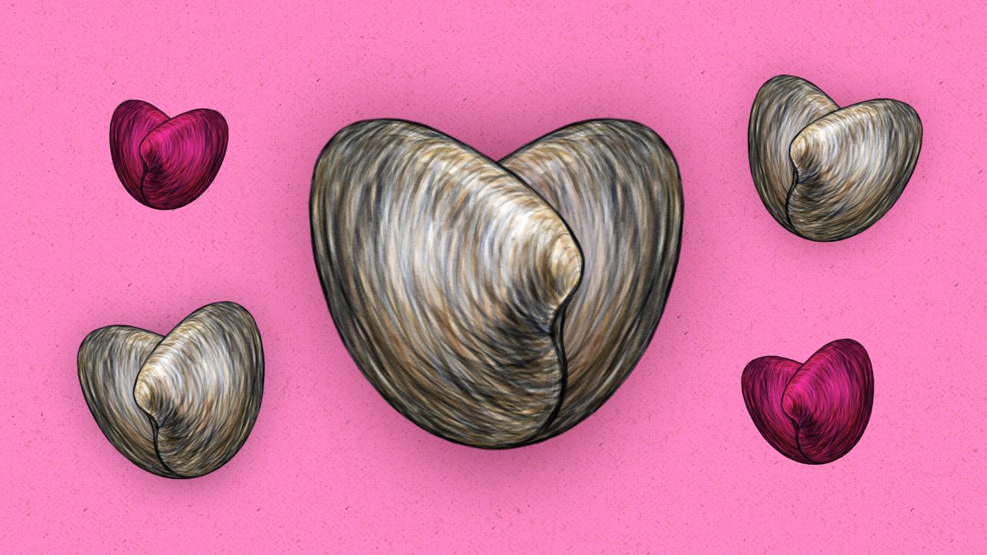 kim-gee-studio-graphic-design-editorial-illustration-clams