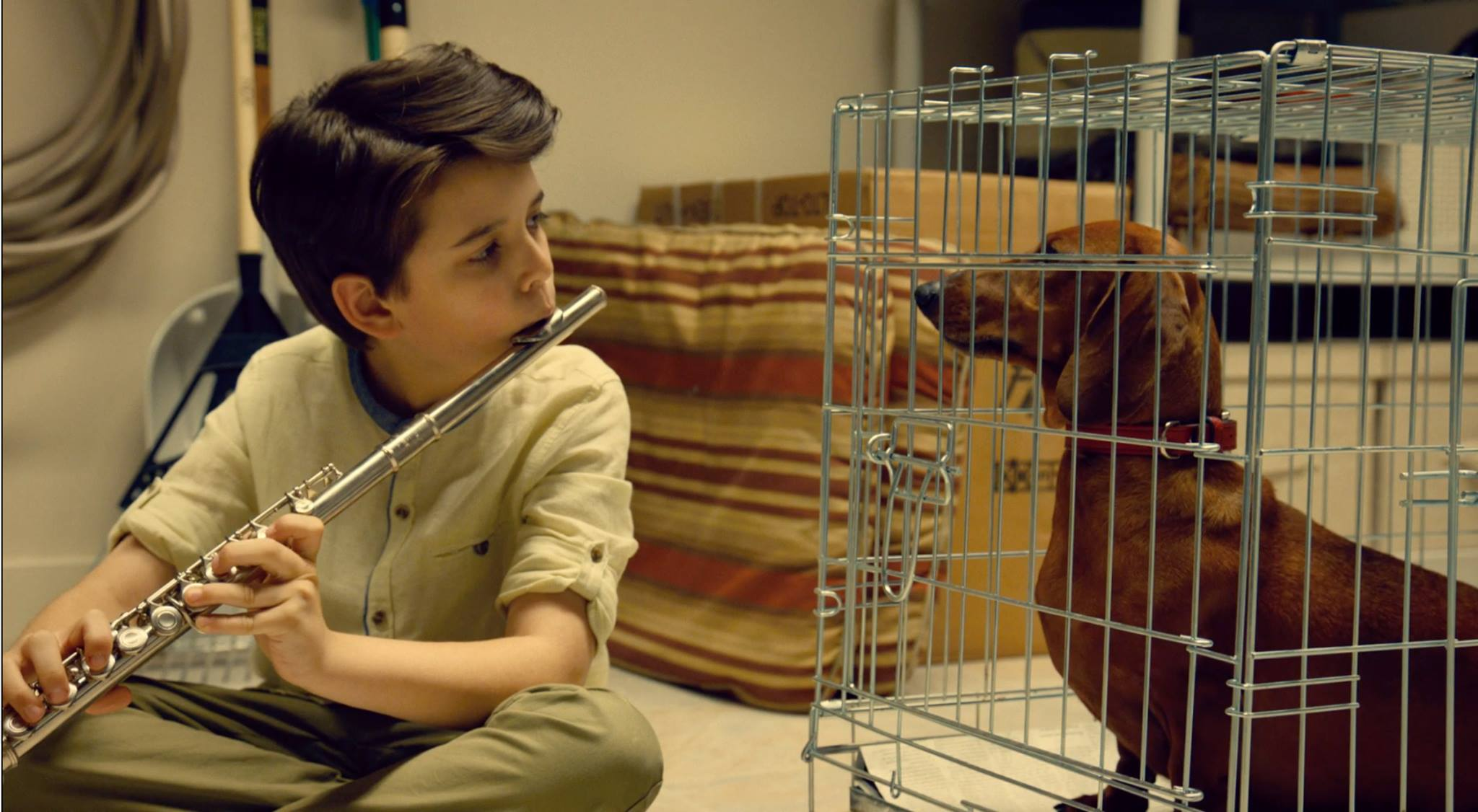 """Wiener-Dog"" opens in select cities July 1. (Photo courtesy of IFC Films, used with permission)"