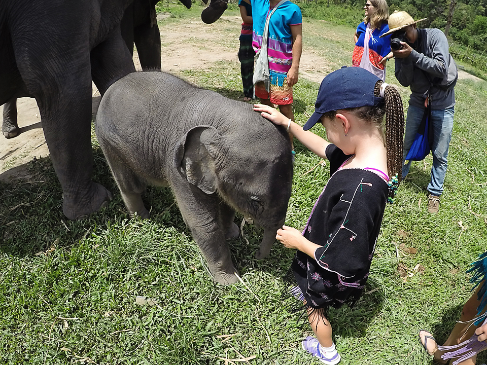 Bella and her wee baby elephant friend.