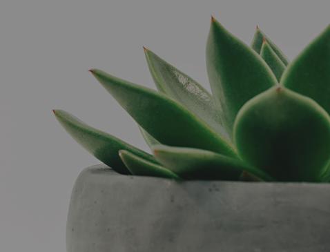 Zen_Plant.png