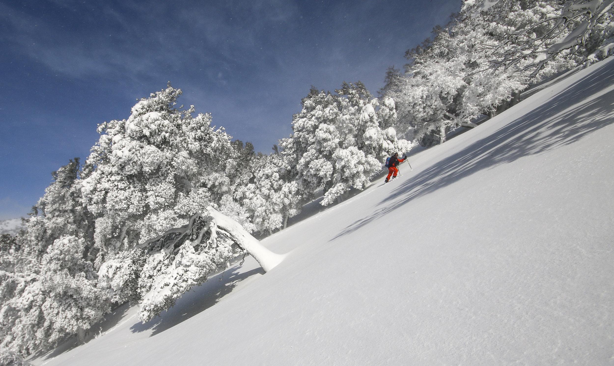Ski de rando dans les oliviers