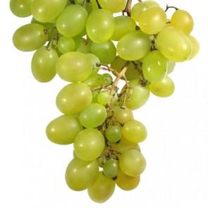 seed_Grape-295x295.jpg