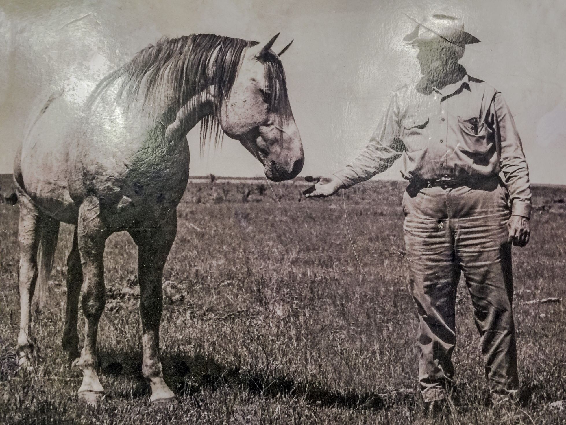R.A. Brown with legandary stallion BLUE GOLD