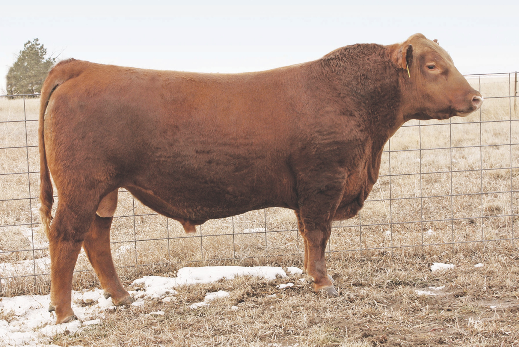 BROWN REAL DEAL A7701