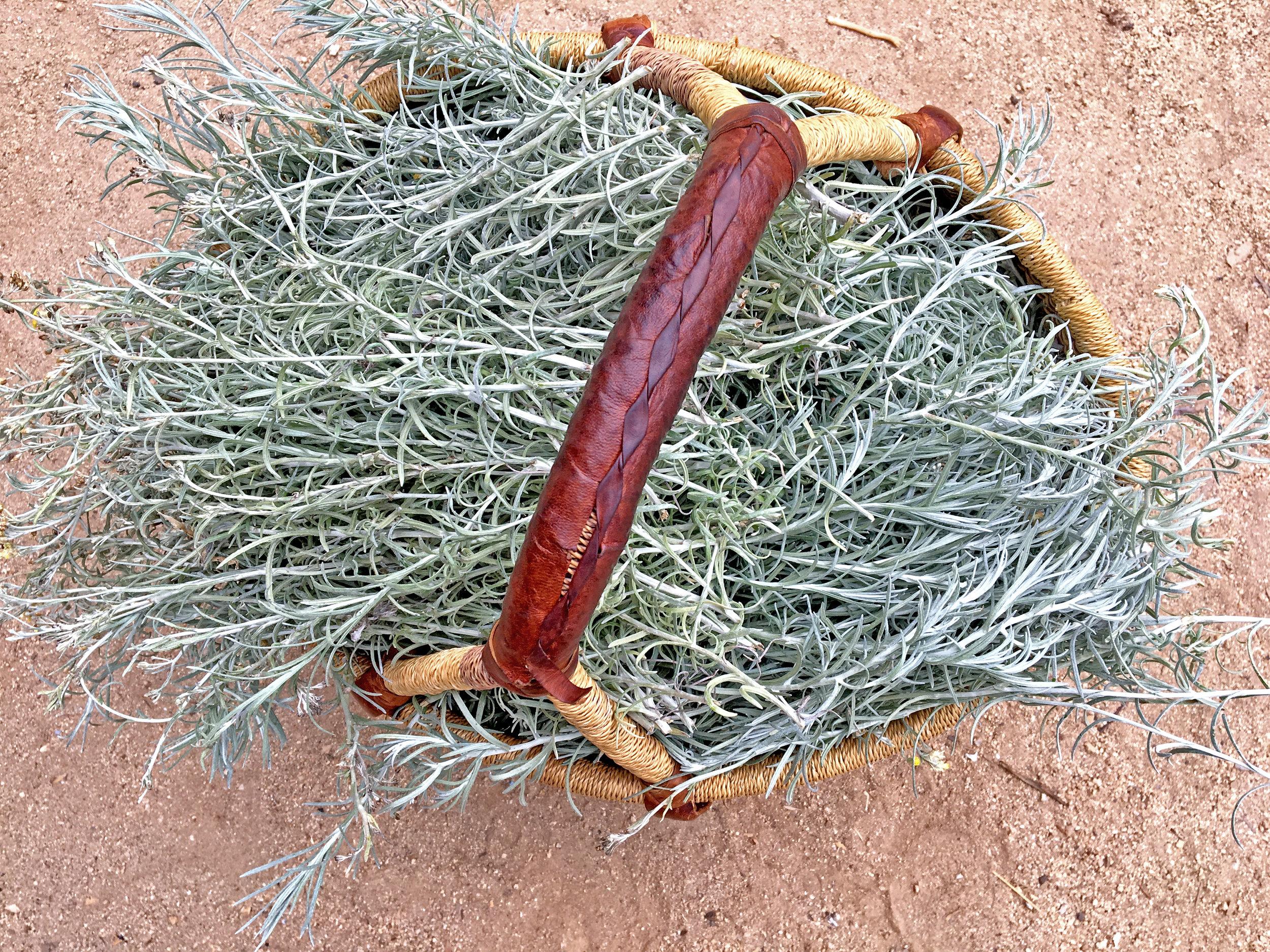 Helichrysum Hydrosol - Wild Craft Oils - Encinitas, Ca.