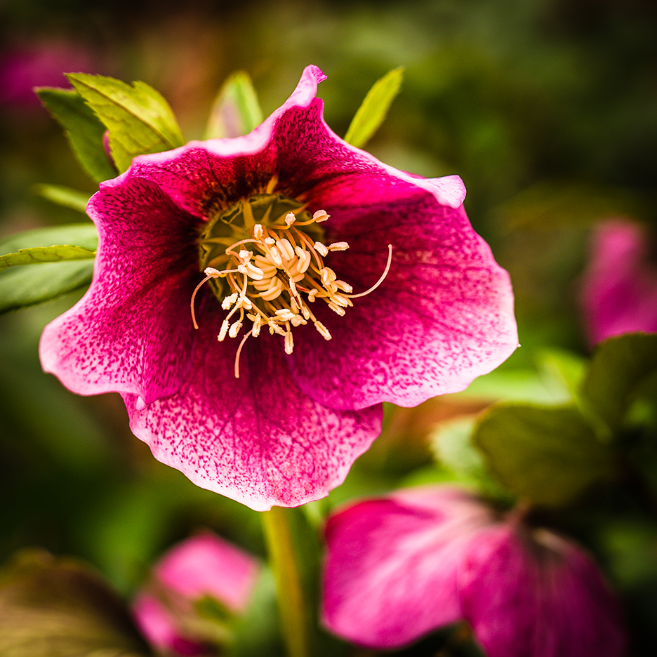Pretty Red Flower CC1_1469.png