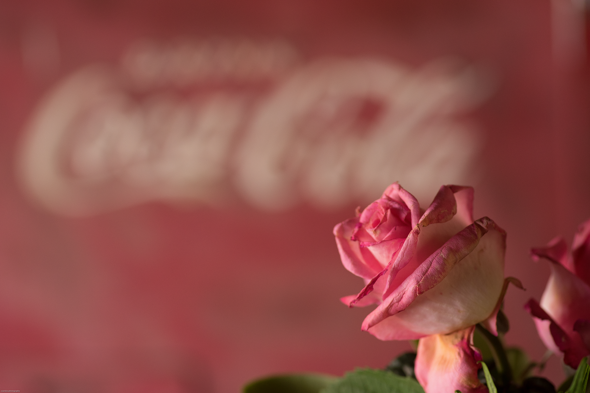 Coca Cola & Red Rose - Cottrell & Co. - CC1_4184.png