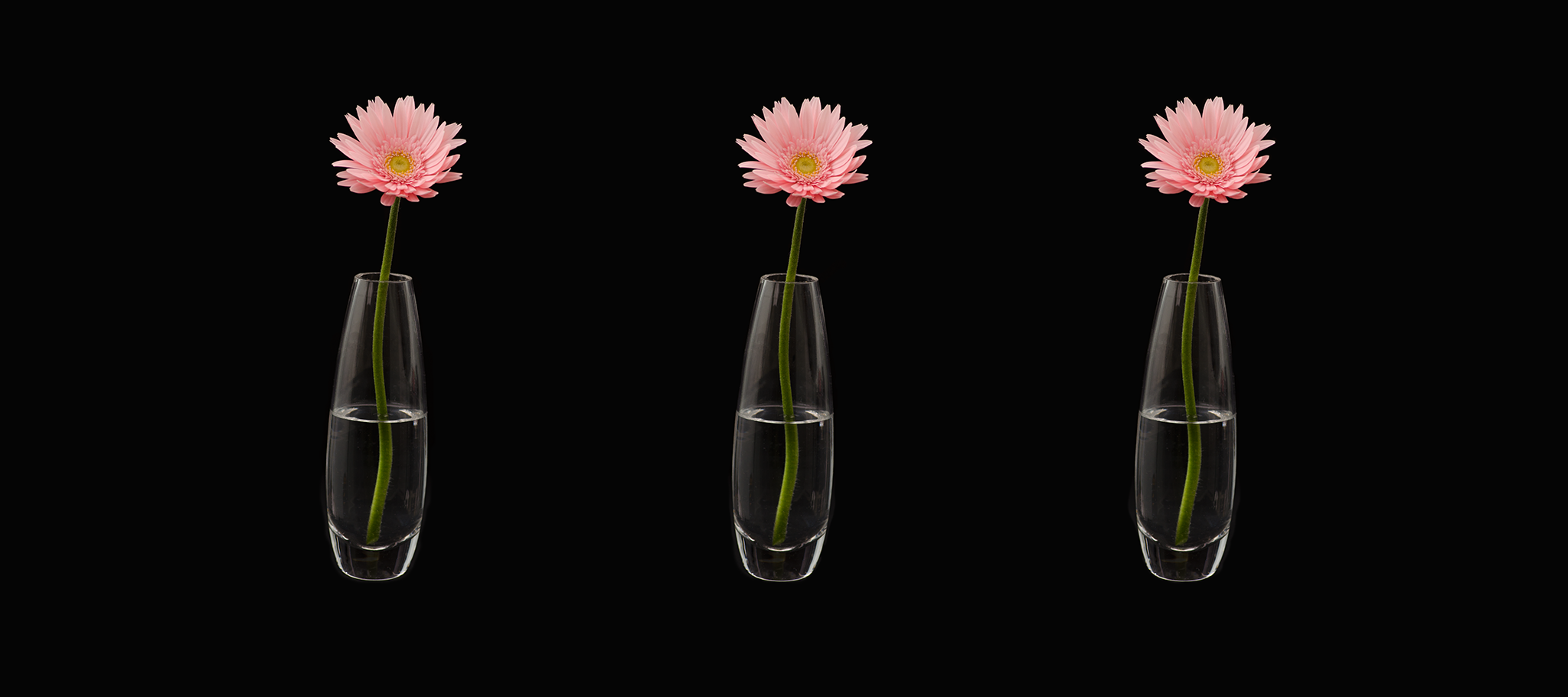 Triple Daisy - Cottrell & Co. - CC1_1004.png