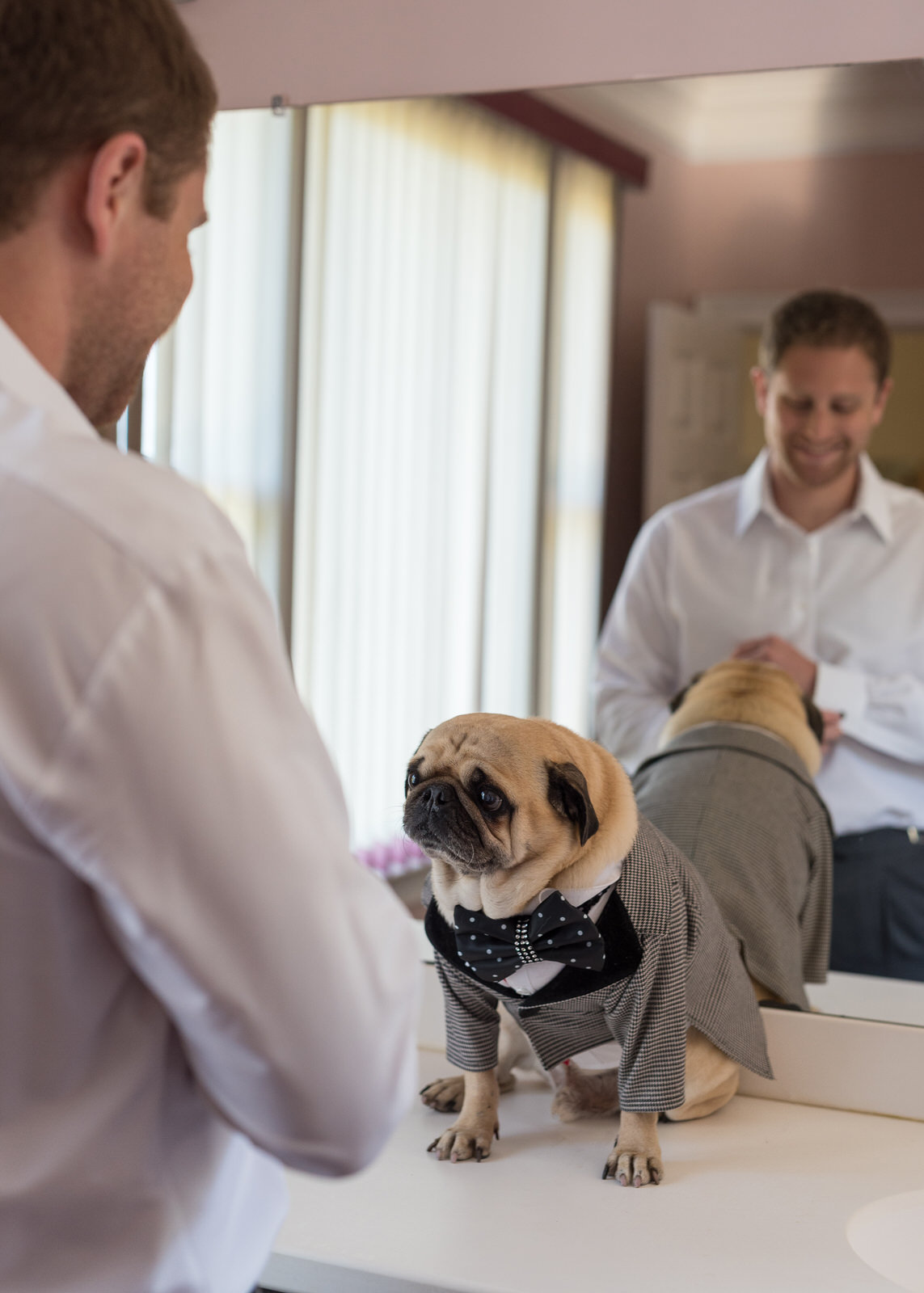 Groom and Pug Getting Ready