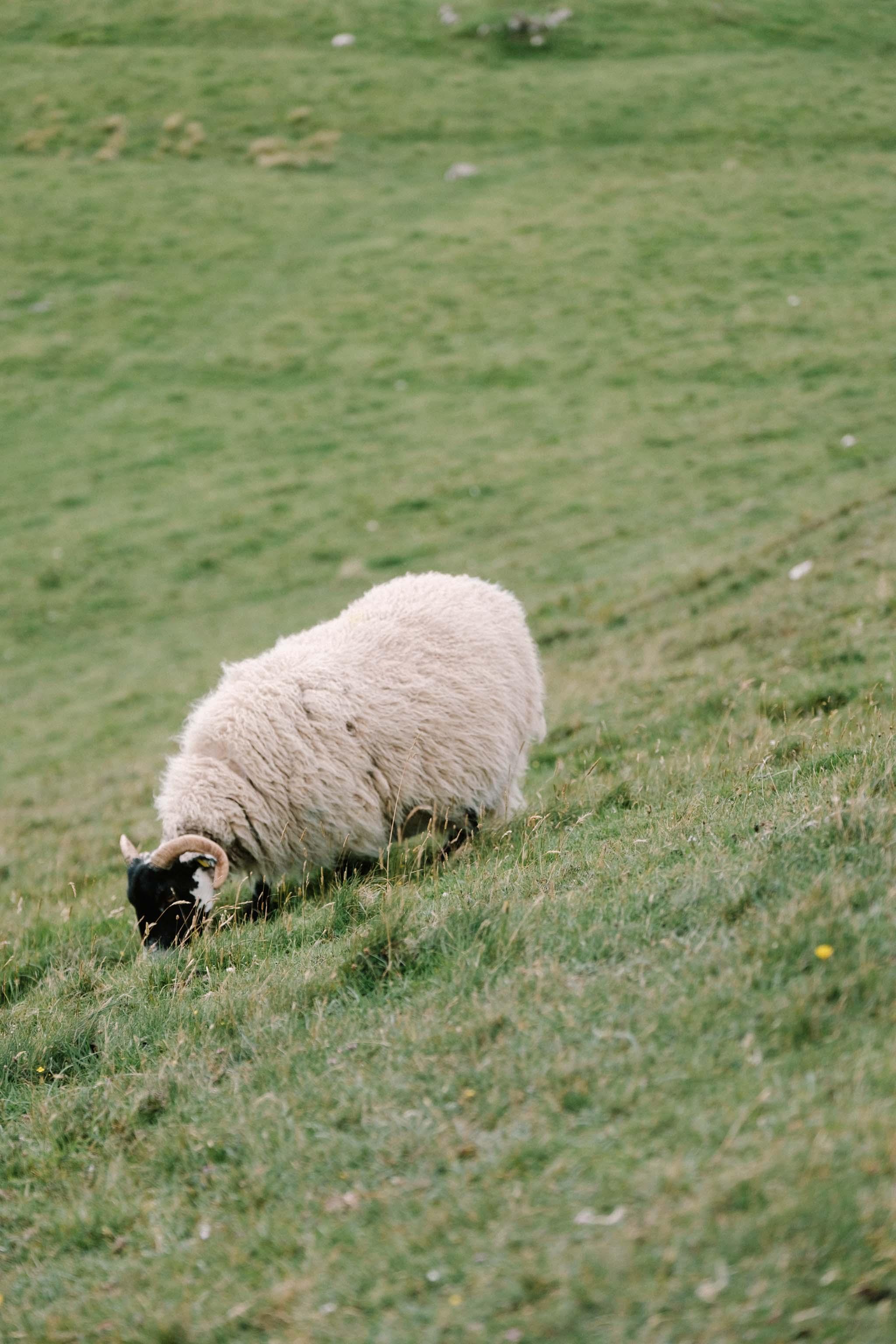 Highland Explorer Tours-160724-164219.jpg