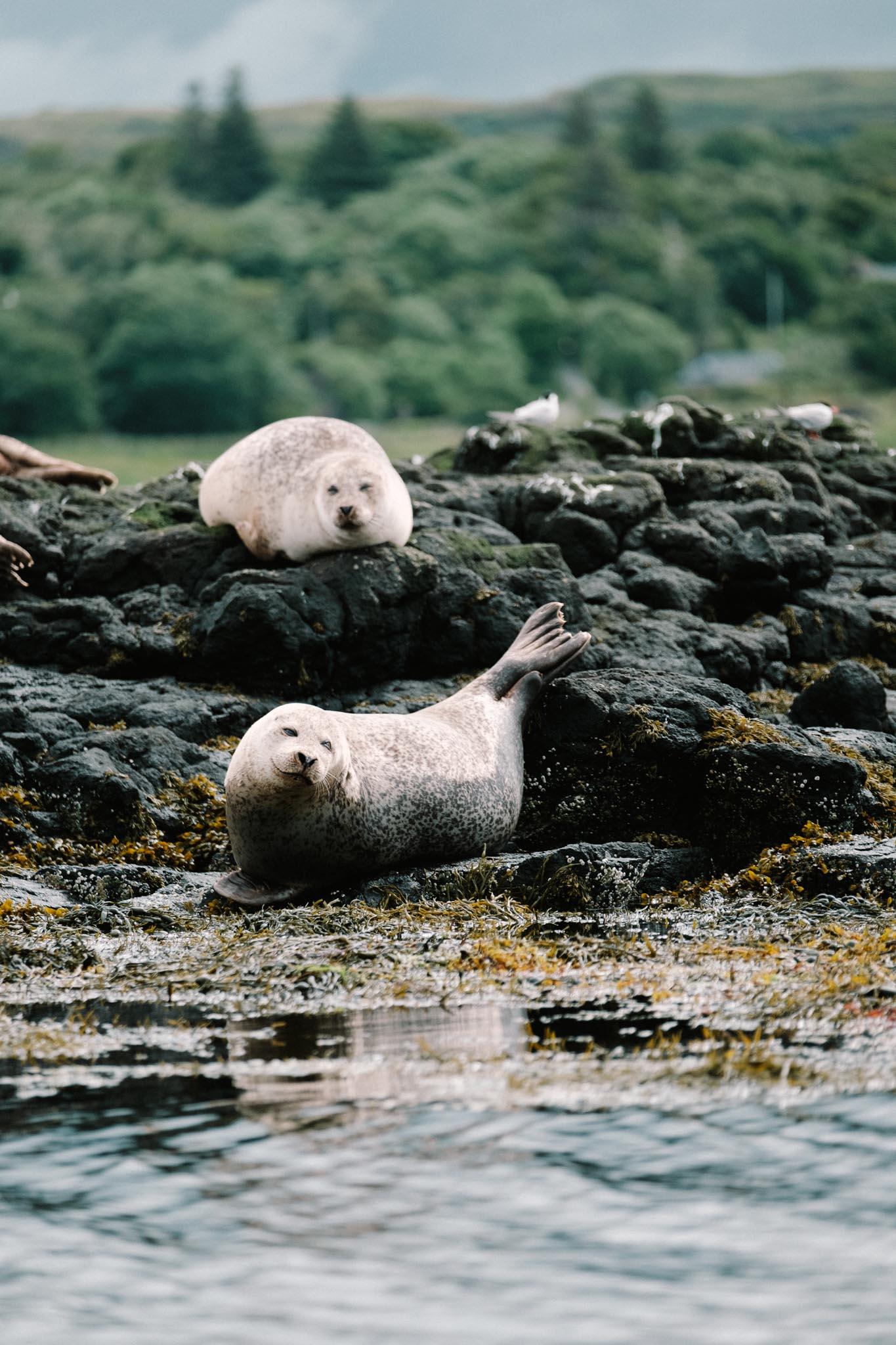 Highland Explorer Tours-160724-121302.jpg