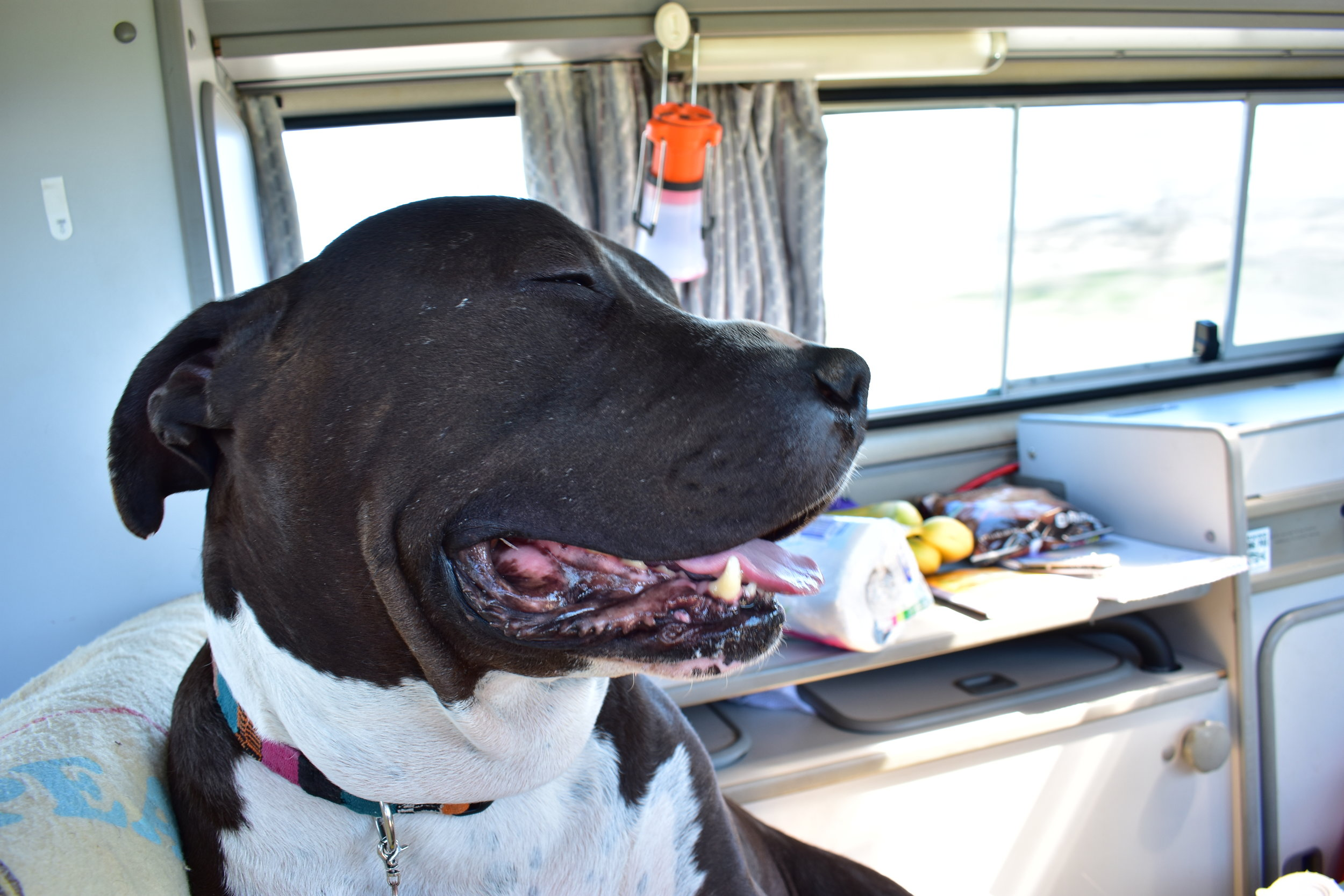 Snoop's First Ride in a Westy