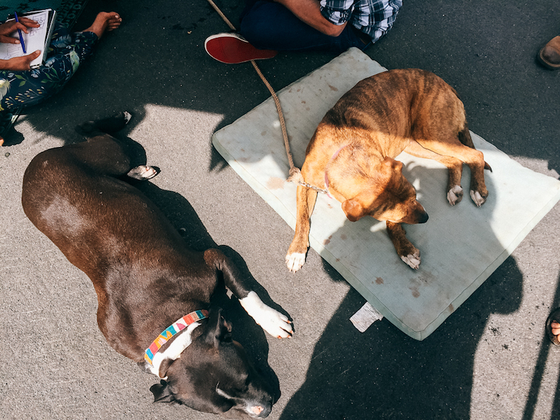 Enjoying a sun bath with Penny Rose of @wheresmyofficenow
