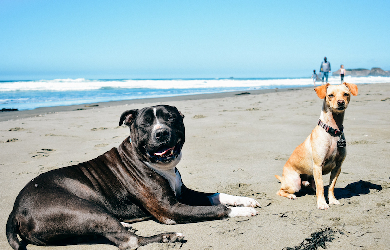 Kickin' it with his bro Bodhi of @bettyintheusa at the beach