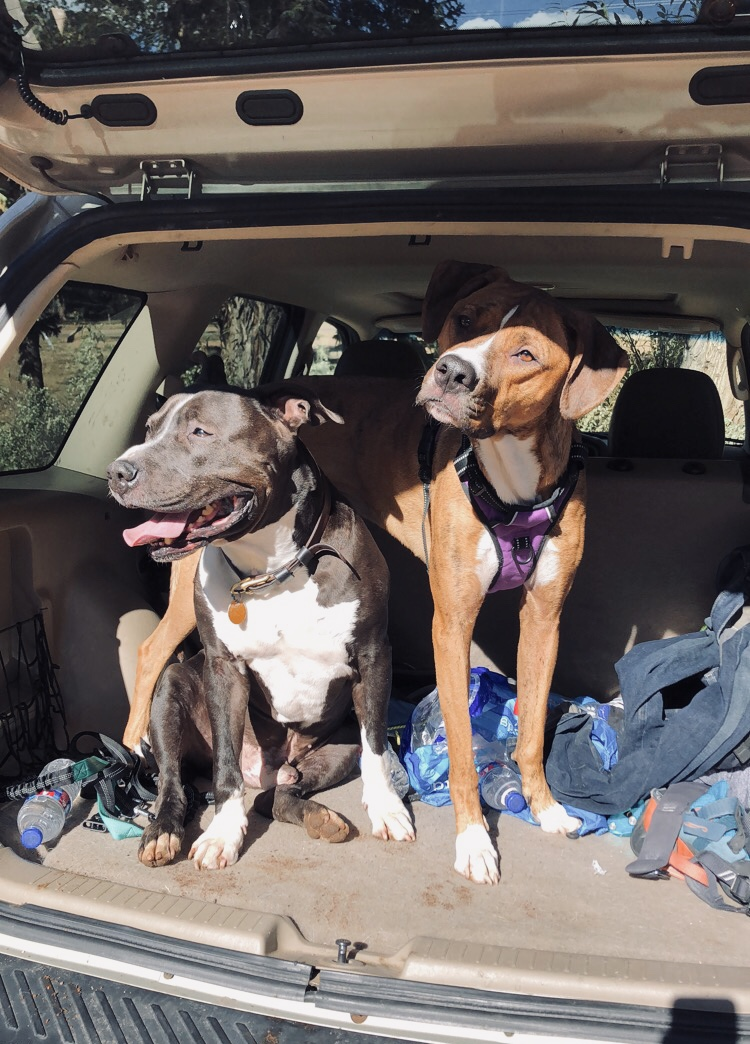 Snoop and Lola after a hike in CO Springs.