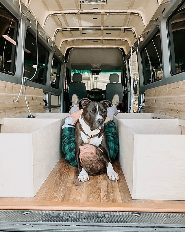 Take a note from Snoop this hump day: 𝗗𝗼𝗻'𝘁 𝘄𝗼𝗿𝗸 𝘁𝗼𝗼 𝗵𝗮𝗿𝗱😉 . #snoopthewise #pitbull #flashback #vanbuild #vanlife #diyvan