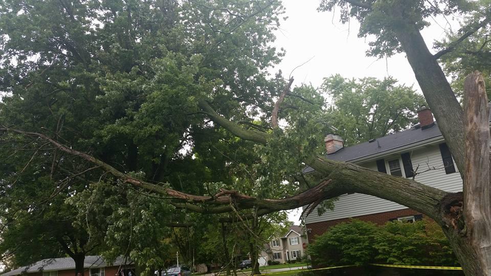 Storm Damage -