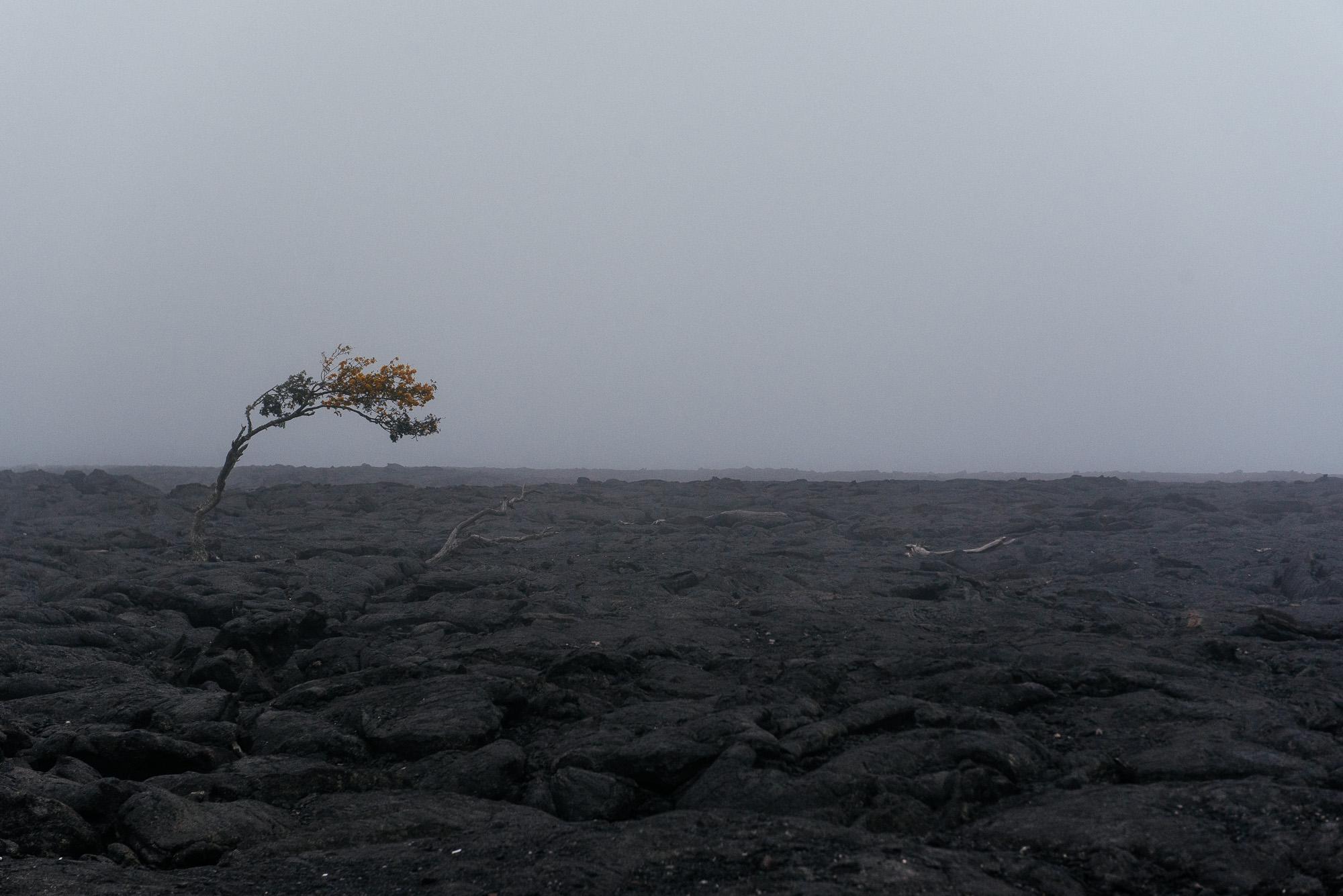 Paysage volcanique sur Big Island -  Volcanic landscape on Big Island