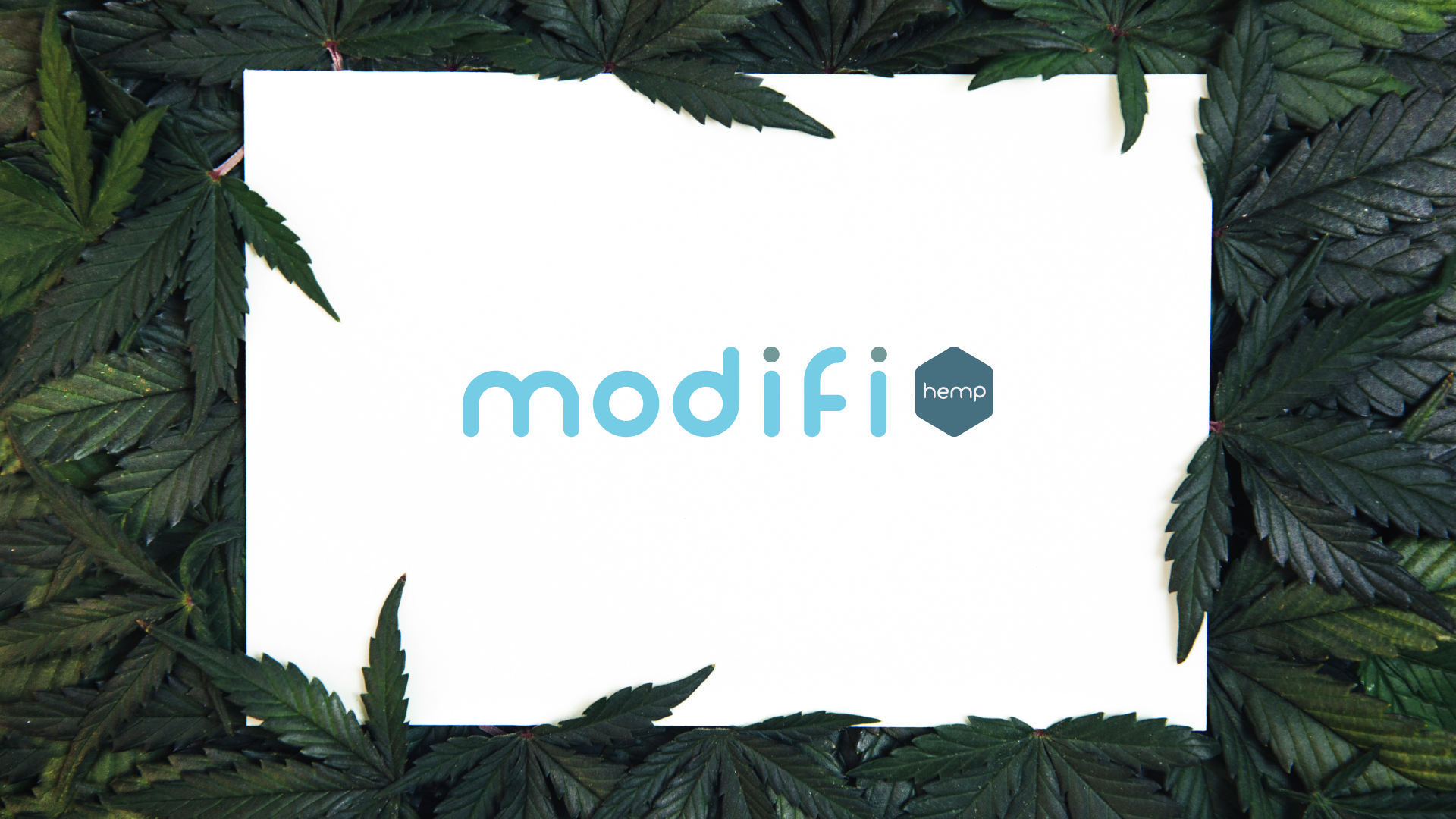 ModifiArtboard 1.png