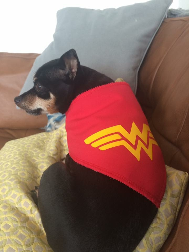 Our WONDER WOMAN and the real BOSS of me! #pupperazzi #dogsofinstagram