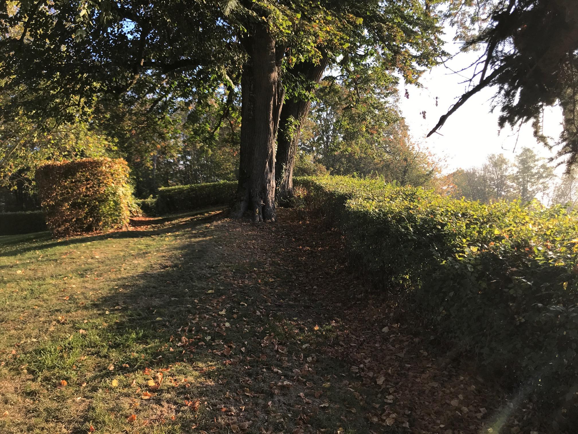 park morning IMG_5806.JPG