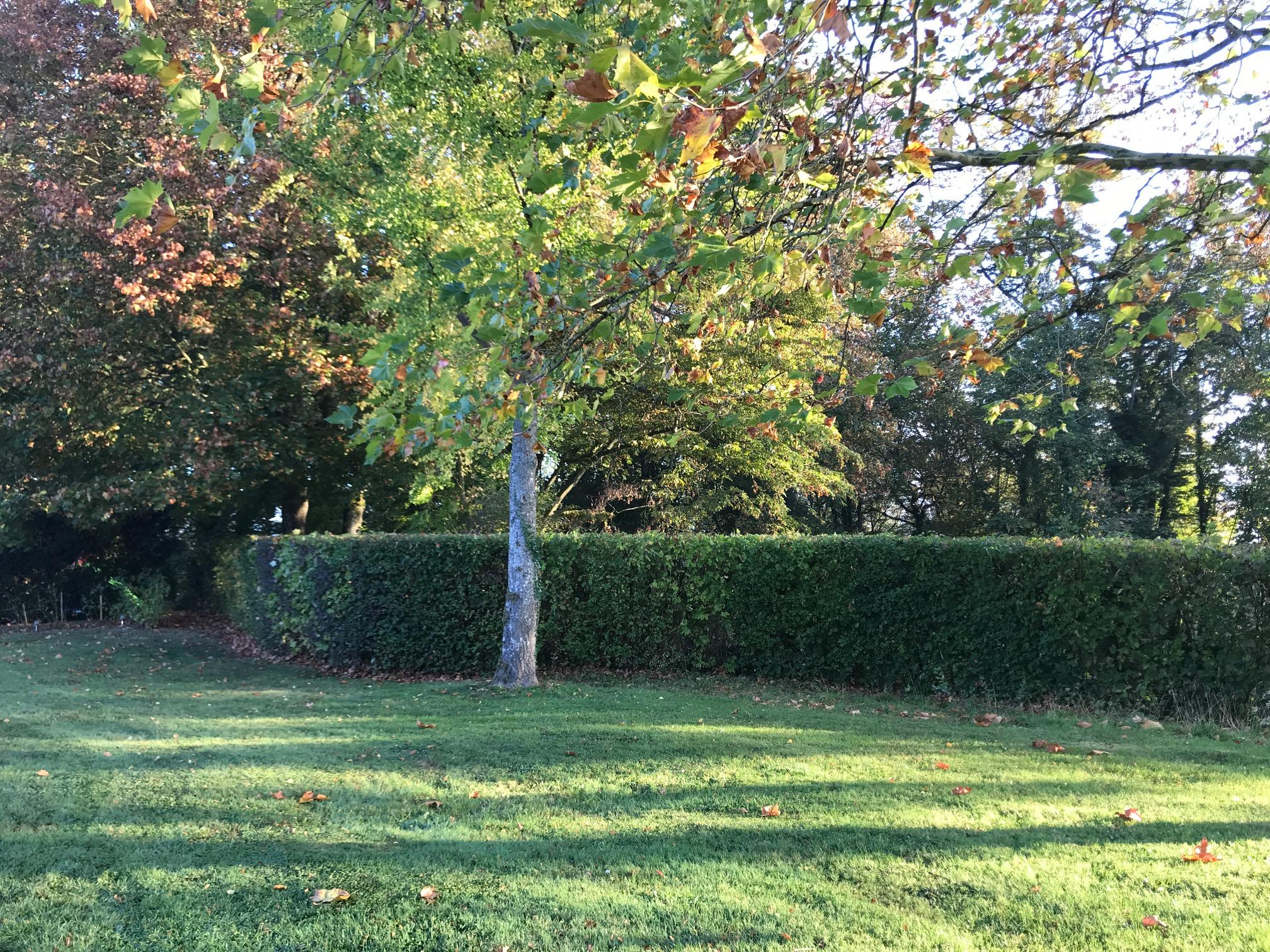 park morning IMG_5811.JPG