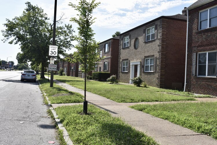 Rows and rows of little to no front-scaping along Chippewa