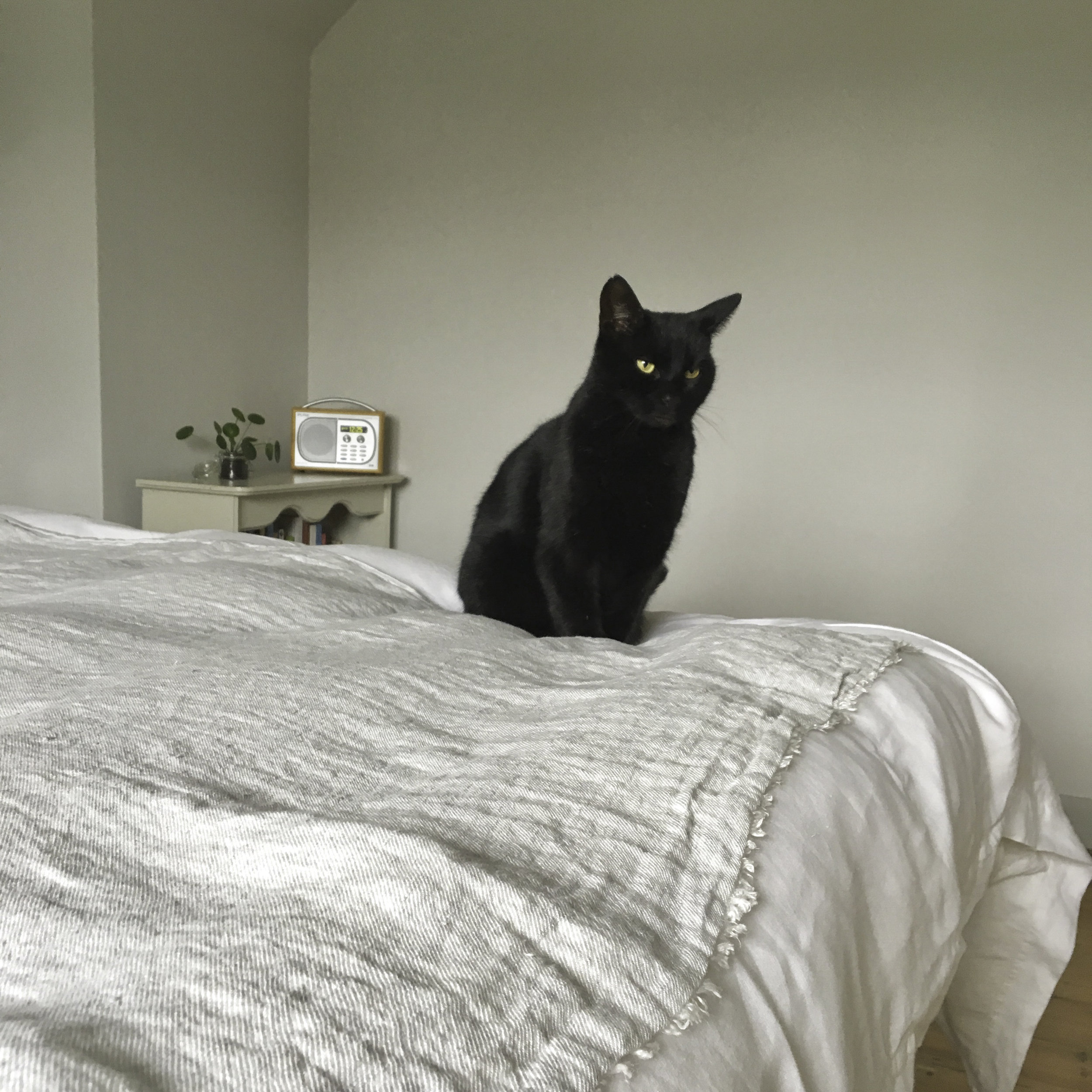 Don't let the cat on it if your cat is black and your linen is white. Muddy paws and black hairs!