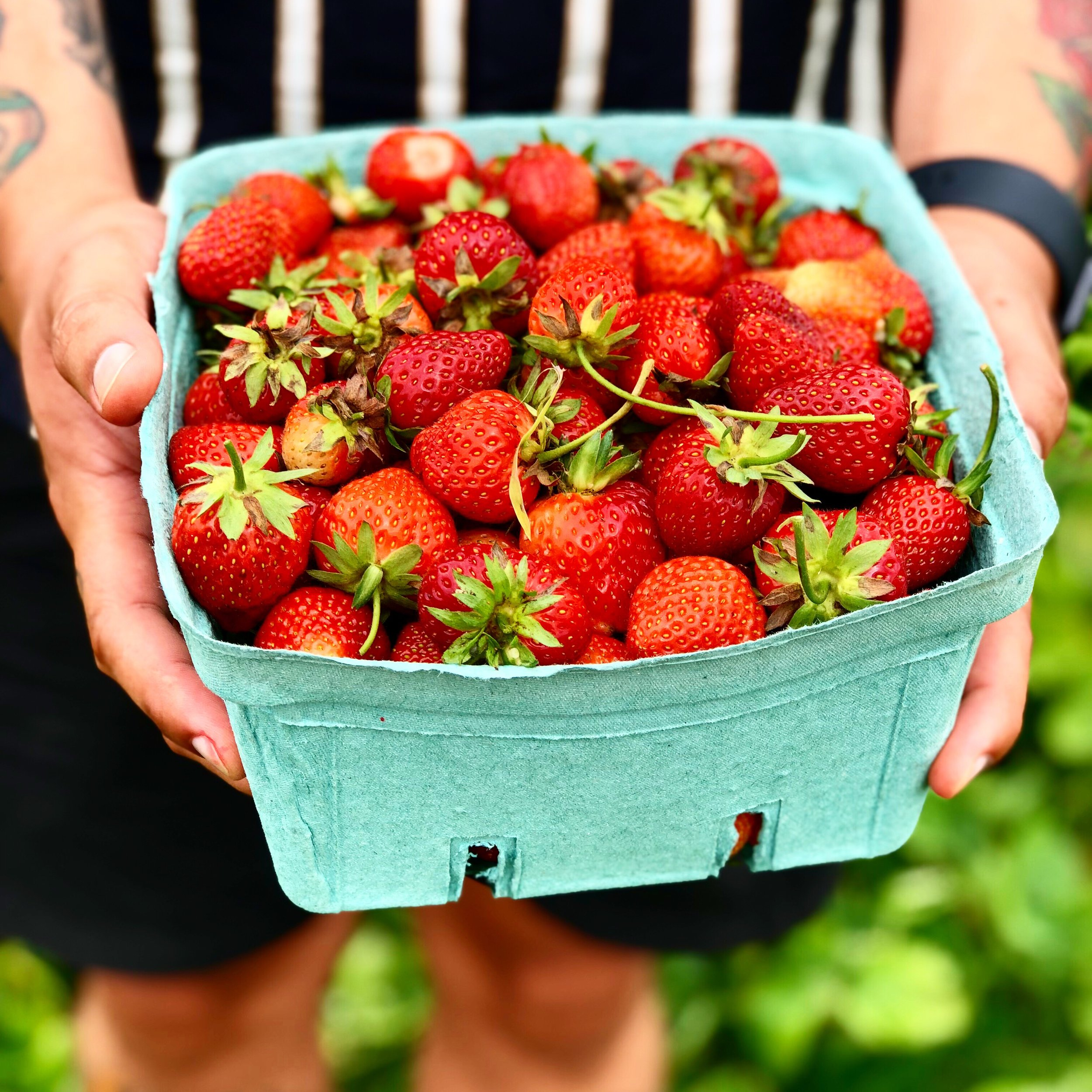 Summer is the perfect time to find a U-Pick farm near you where you can gather your own ingredients for your canning recipes.