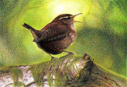 Singing Wren ~ Nick Day, wildlife artist