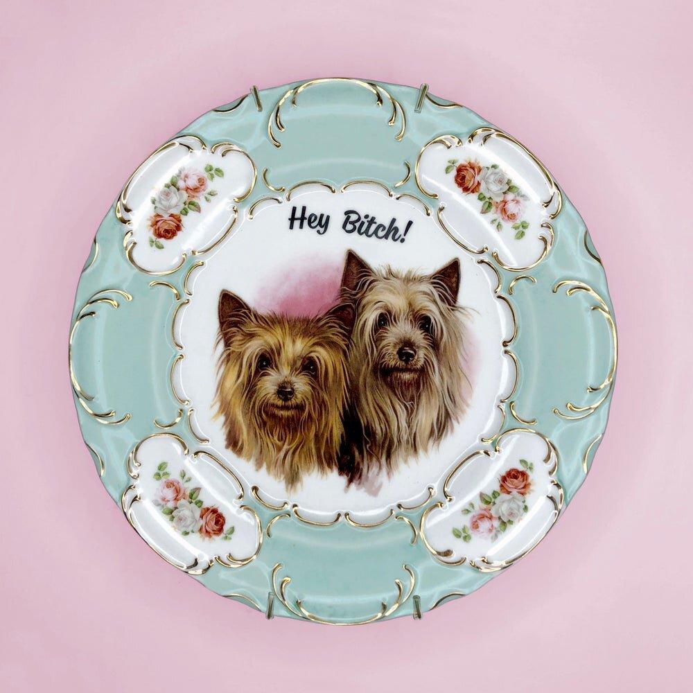 terriers-pansy1.jpg