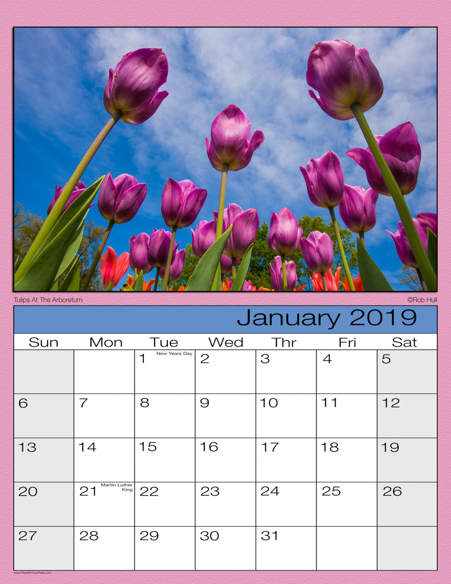 Tulip Sample-1200.jpg