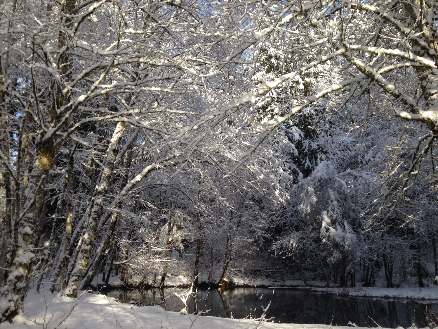 the_woods_winter_2018_snow_pond.jpg