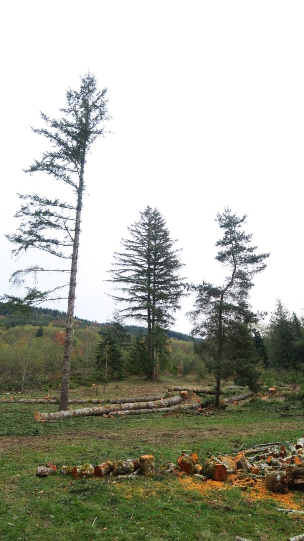 last doug and pine.JPG