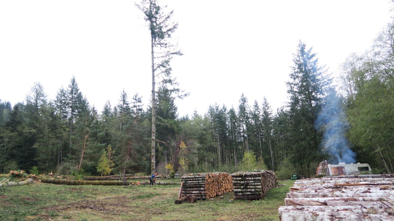 last doug firewood rows.JPG