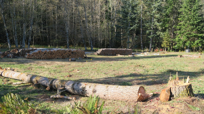 log and firewood rows good.JPG