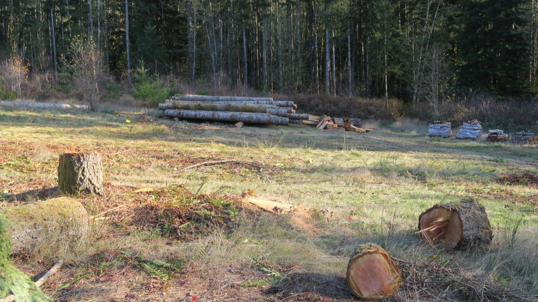 logs in stack.JPG