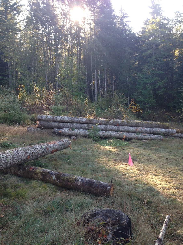 oct logs.jpg