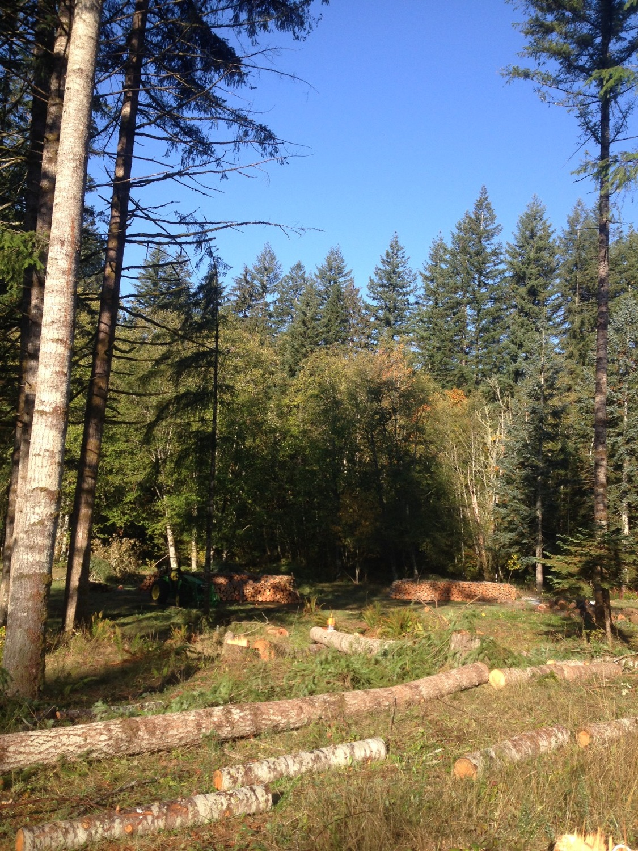 oct make logs west.jpg