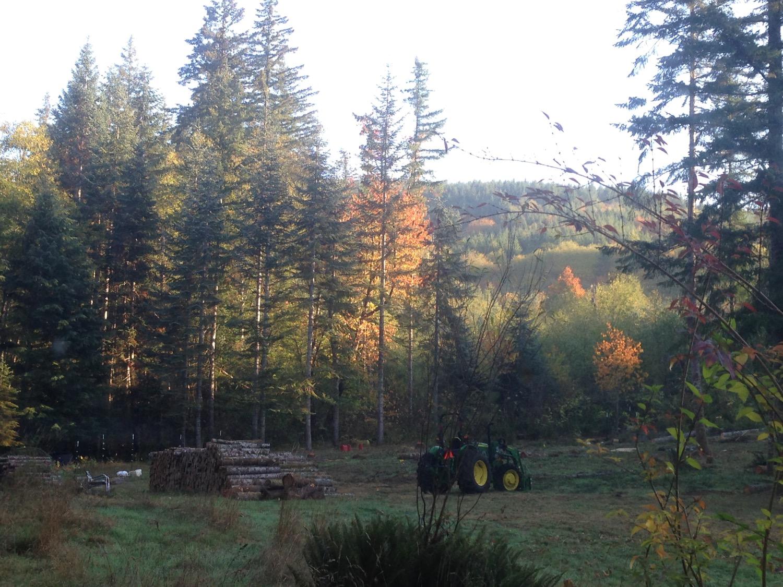 oct meadow north firewood piles.jpg
