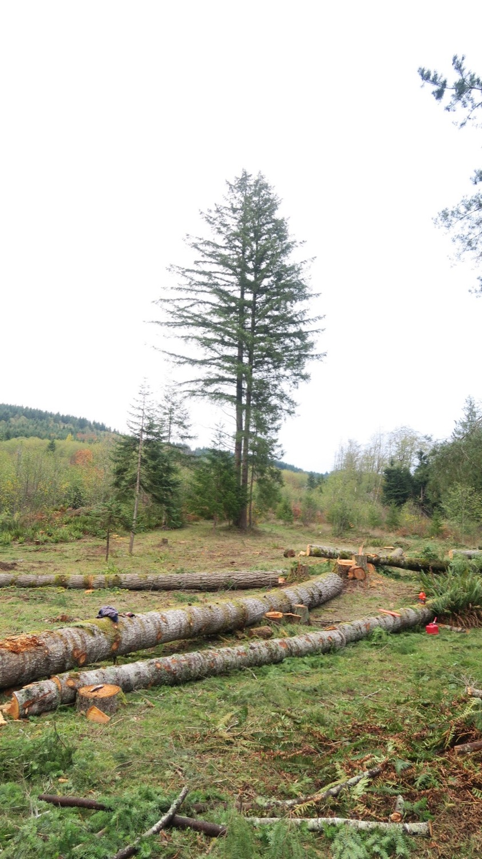 sisters w logs foreground.JPG