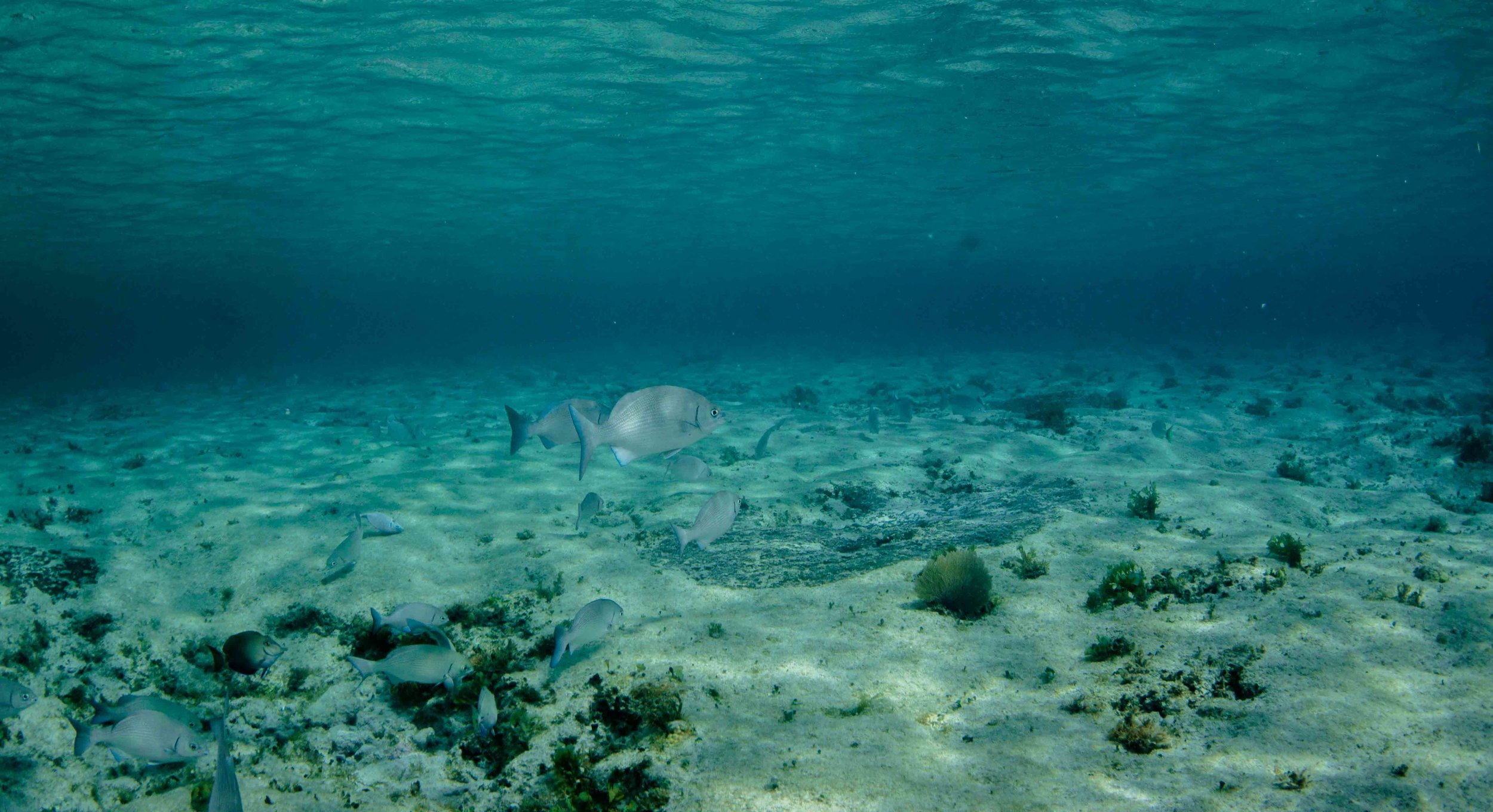 Cozumel Mexico - Scuba Diving - Fish - Underwater Photography
