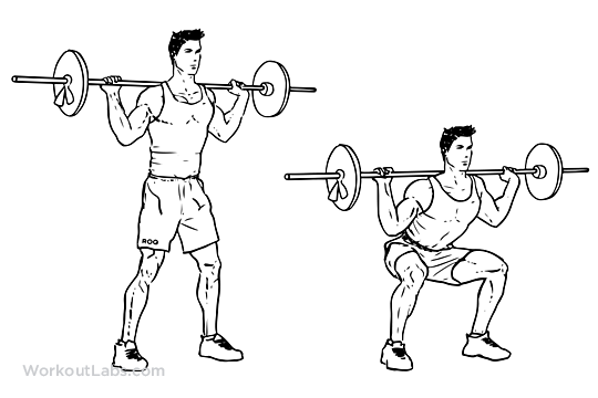 Barbell-Squat.png