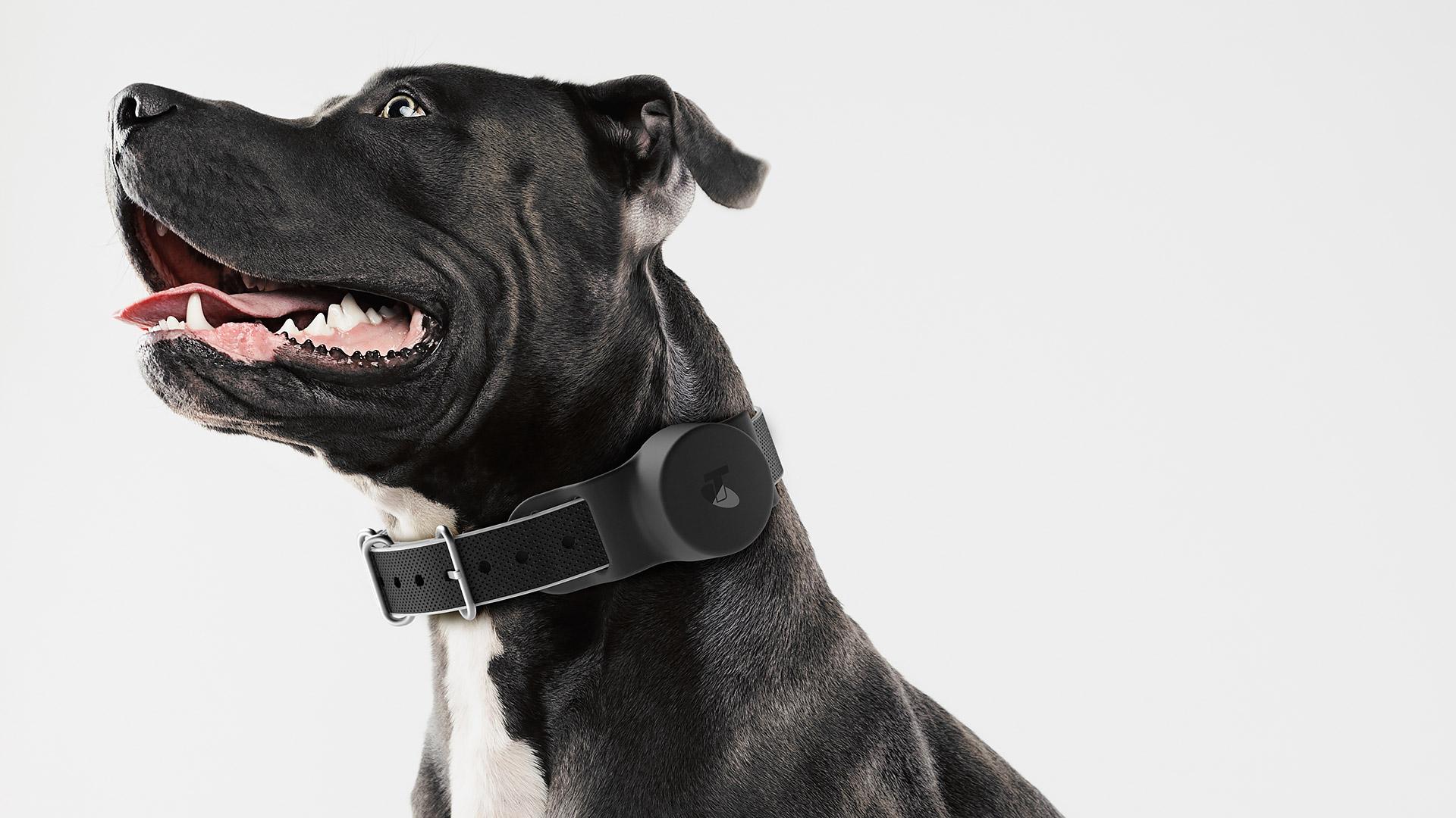 Telstra-WiFi-Dog-Collar