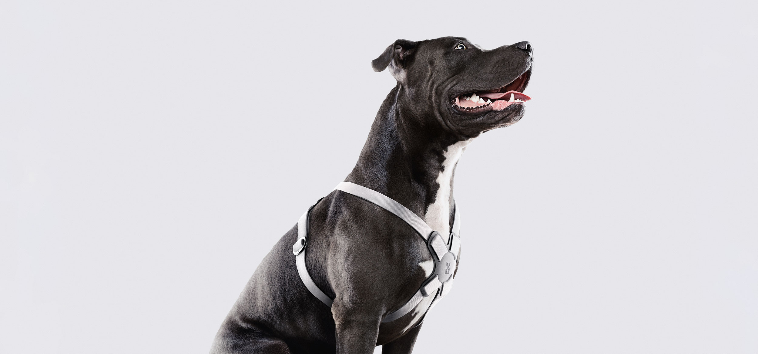 WHITE HARNESS ON DOG.jpg