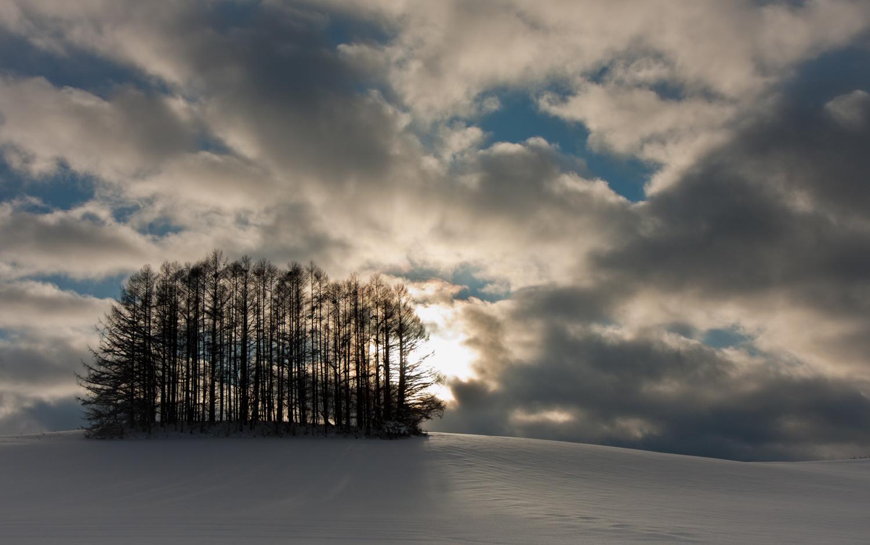 Tree Shadows in Winter Sun, Biei, Japan, 2009
